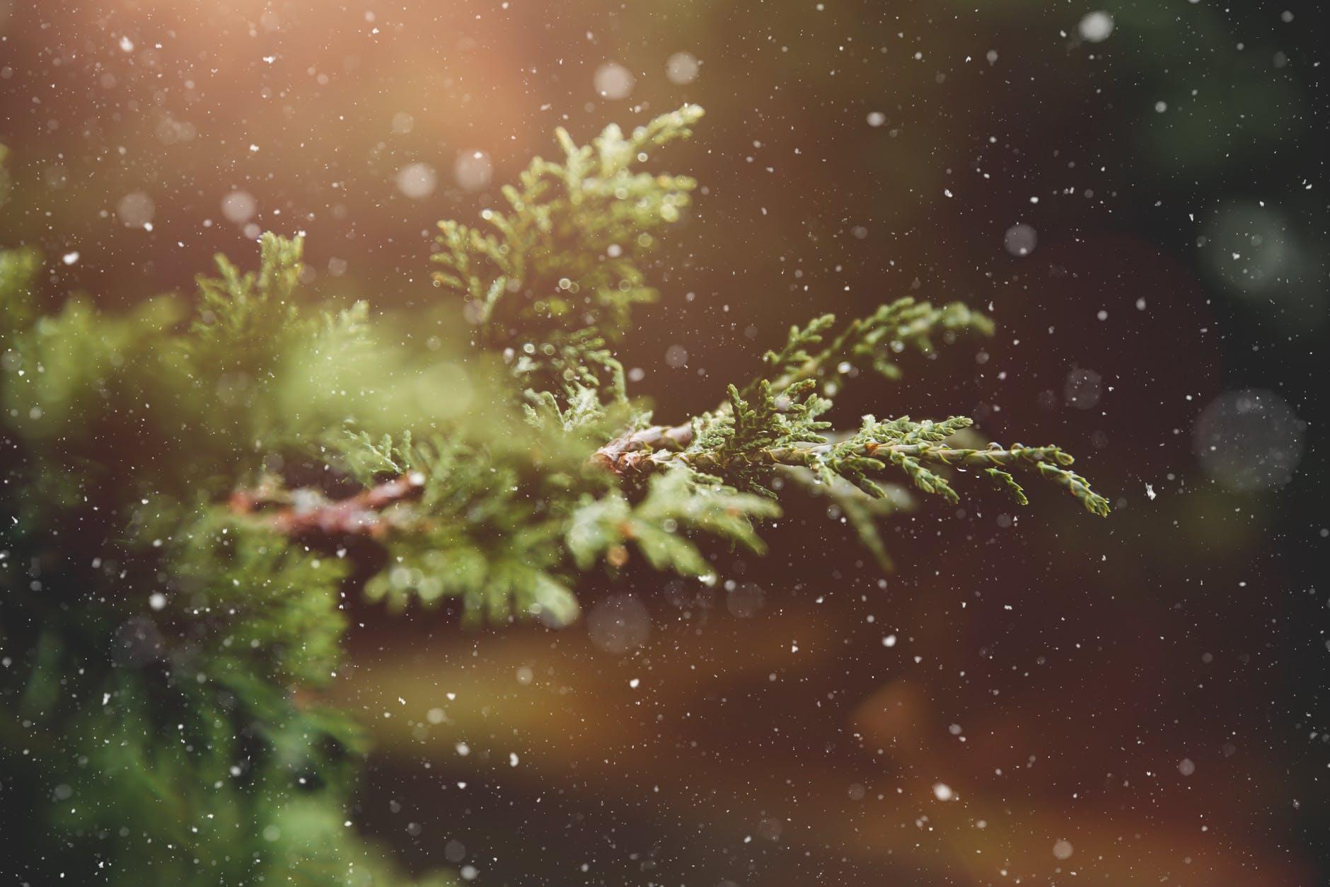 advent blur branch bright